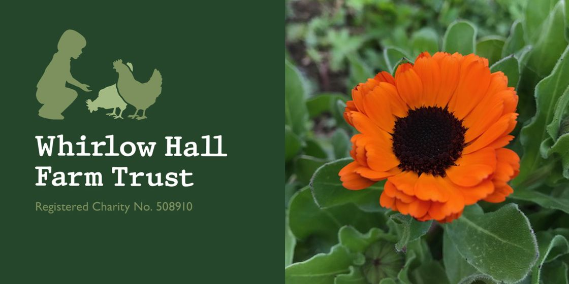 Anne Brady - Volunteering day at Whirlow Hall Farm Trust
